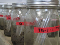 Jars with soil samples
